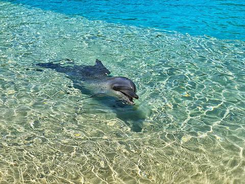 黄金海岸海洋世界旅游景点图片