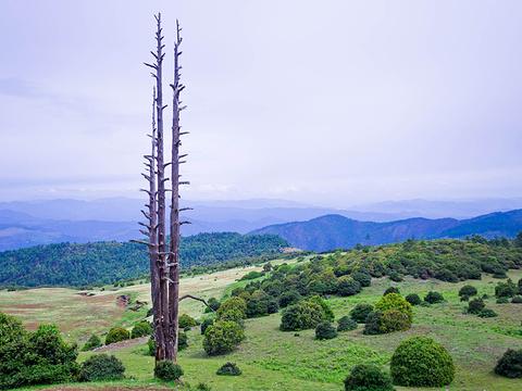格萨拉生态旅游区旅游景点图片