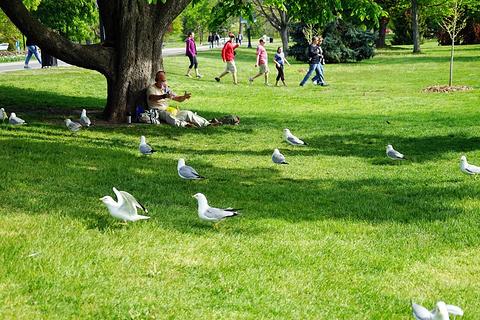 维多利亚女王公园旅游景点攻略图