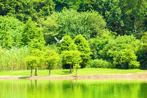 金牛湖的图片