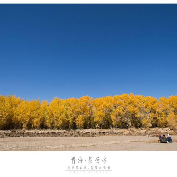 新疆胡杨林7日摄影采风攻略