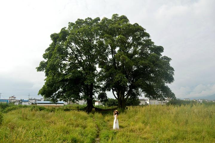 """""""_夫妻树""""的评论图片"""