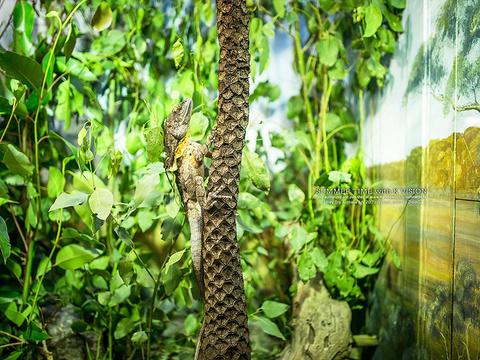 塔龙加动物园旅游景点图片