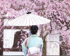 【預約櫻花雨】我和京都的第三个故事