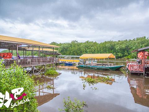Kawa红树林旅游景点图片