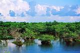 八门湾红树林