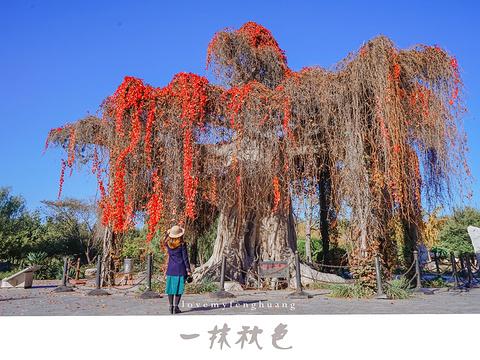 石家庄植物园旅游景点图片