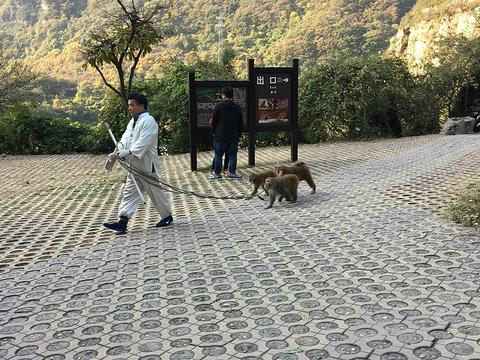 猕猴谷旅游景点图片