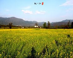 红尘旧梦话徽州(婺源-黄山-宏村)