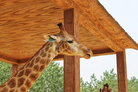 杭州野生动物园旅游景点攻略图