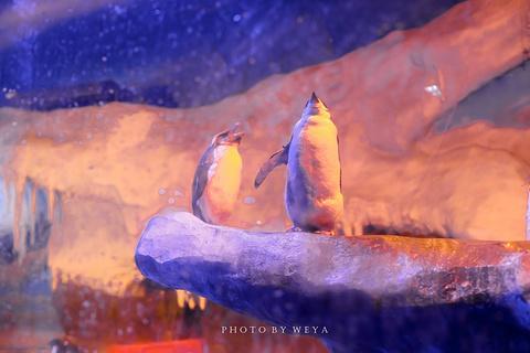 成都海昌极地海洋世界旅游景点攻略图