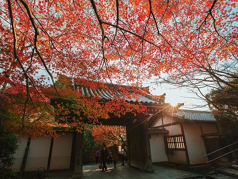 龙安寺旅游景点图片