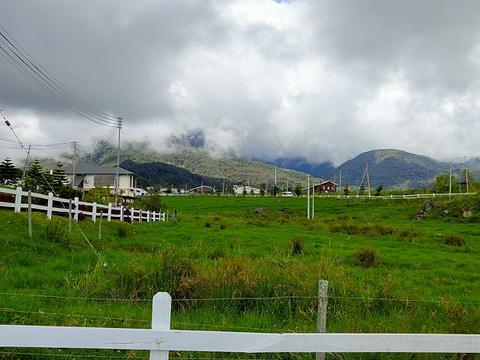 Desa奶牛农场旅游景点图片
