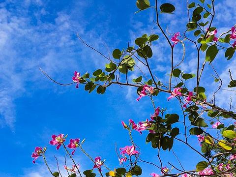 东姑阿都拉曼海洋公园旅游景点图片