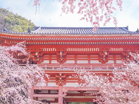 醍醐寺旅游景点图片