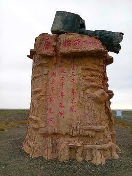 克拉玛依胡杨林部落旅游景点攻略图