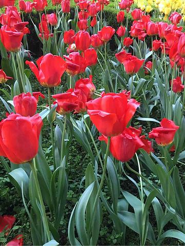 """""""晒太阳,看花花,吹吹风,花卉园绝对是个好地方!花卉园在轻轨6号线口上。这个季节是郁金香开放的时候_花卉园""""的评论图片"""