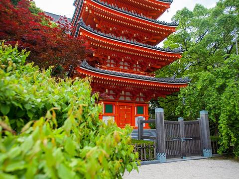 东长寺旅游景点图片