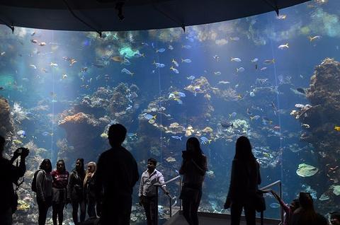 加州科学博物馆