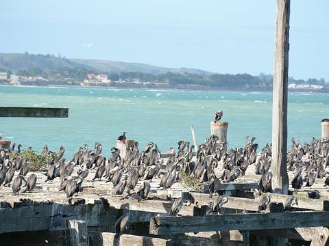 奥马鲁蓝企鹅保护中心旅游景点图片