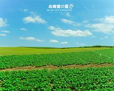 """如果有一个地方可以四季相约,请记得那是北海道:忆初夏的""""味""""道"""