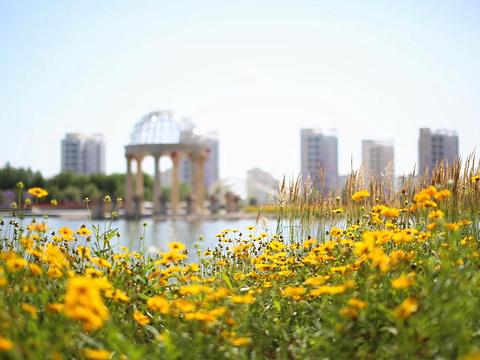 金川紫金花海旅游景点图片
