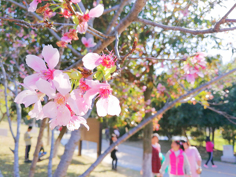聚龙山生态公园旅游景点图片