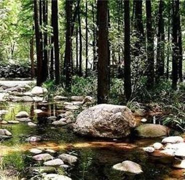 和平森林公园的图片