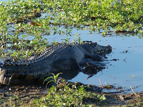 鳄鱼旅游景点图片