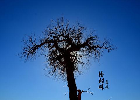 额济纳旗黑城景区旅游景点攻略图