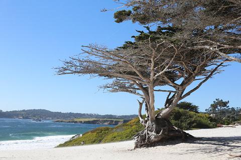 白沙海滩旅游景点攻略图