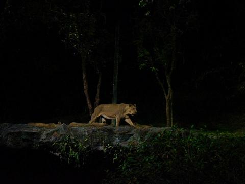 新加坡夜间野生动物园旅游景点图片