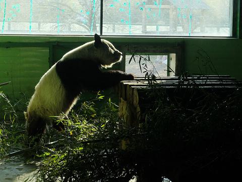 石家庄市动物园旅游景点图片