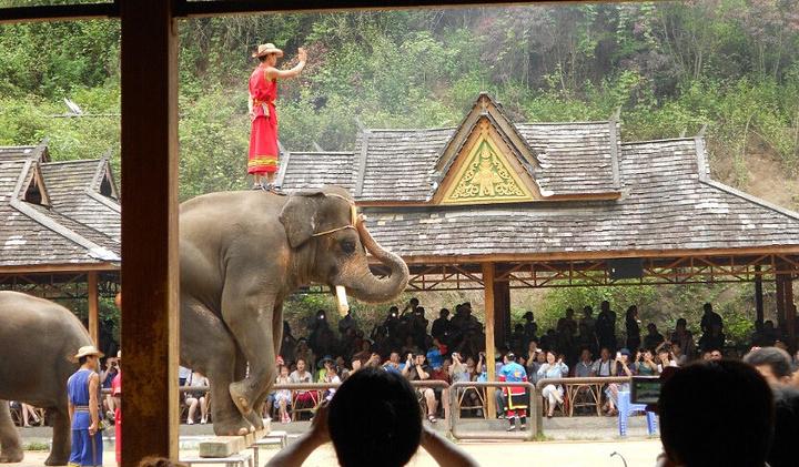 """""""野象园结束就去了蝴蝶谷,这两个景点是连在一起的。门票是含在团费里的_野象谷""""的评论图片"""