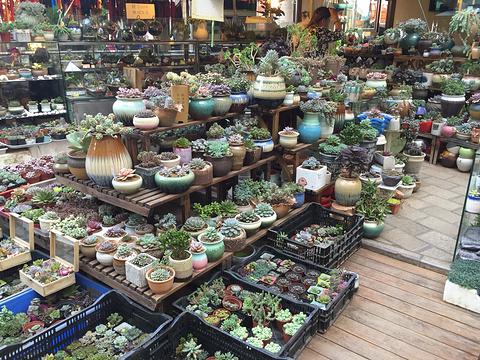 景星街花鸟市场旅游景点图片
