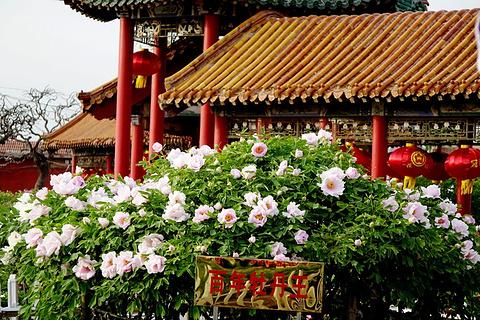 曹州百花园