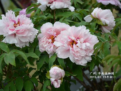 中国科学院华南植物园旅游景点图片