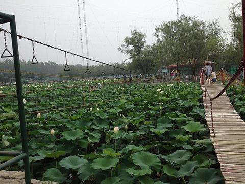 蟹岛绿色生态度假村的图片