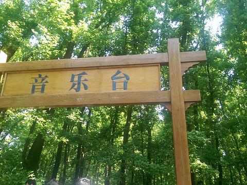 中山陵音乐台旅游景点图片
