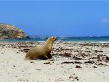 袋鼠岛旅游景点攻略图片