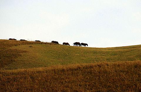 唐布拉风景区旅游景点攻略图
