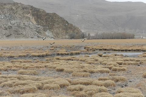 拉鲁湿地国家级自然保护区旅游景点攻略图