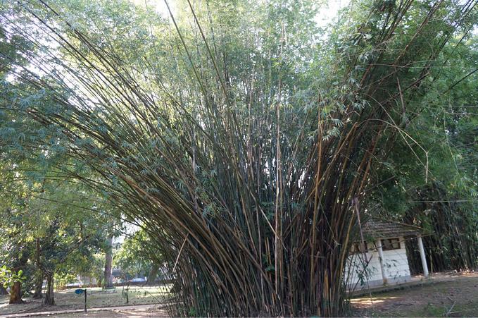 里约植物园图片
