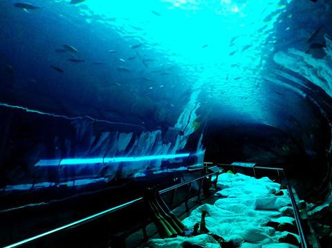 台湾海洋生物博物馆旅游景点攻略图
