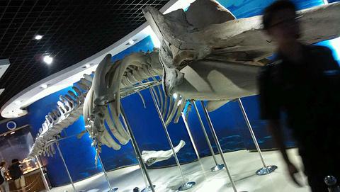 青岛海底世界旅游景点攻略图