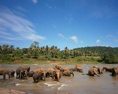 斯里兰卡十日游