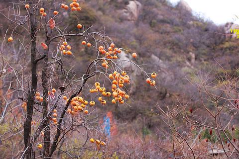 双龙山森林公园旅游景点图片