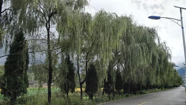 """""""西峡的景色非常好,植被生长都是非常茂密的,这边也是陇南比较有名的景点了,主要以石刻为主,陇南本..._陇南西狭颂摩崖""""的评论图片"""