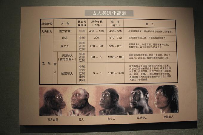 大雁塔 大唐芙蓉园 陕西历史博物馆图片