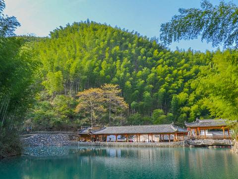 木坑竹海旅游景点图片
